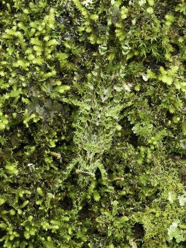 Una lagartija se esconde en medio de lavegetación con sucamuflage natural.