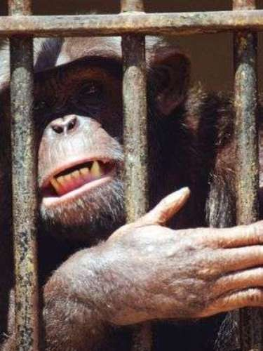 En noviembre del 2011 varios monos en un zoológico brasileño atacaron a mordidas a un hombre que tomó varios tragos de más y que se coló nadando en su recinto. Joao Leite dos Santos le dijo a Globo TV que estaba borracho cuando saltó al agua que separa a los monos araña del público en el zoológico de Sorocaba, cerca de Sao Paulo. Dos Santos logró escapar y recibió atención médica por heridas en las manos y los brazos.