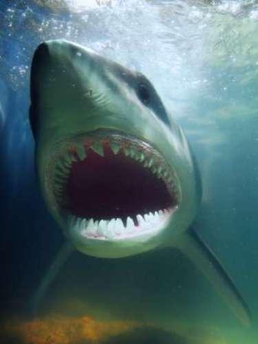 Un surfista murió el 14 de julio de 2012tras ser atacado por un tiburón mientras practicaba surf en la Isla de Cuña, en el suroeste de Australia, según informaron las autoridades locales.