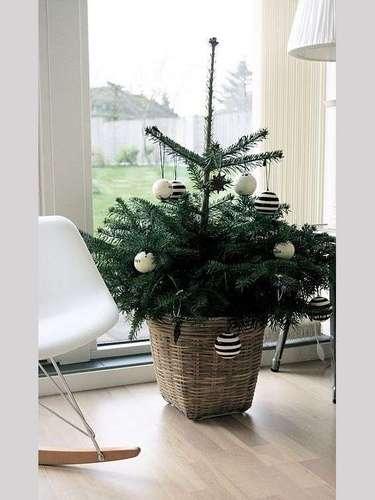 Si eres amante de las plantas, puedes decorar una y llenarla de Navidad.