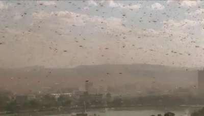 Un enjambre de chapulines cubre la capital de Madagascar   Video: