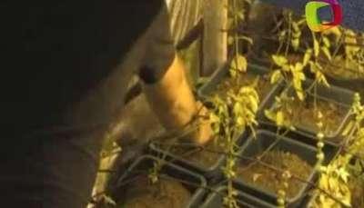 Uruguay abre su primera feria de la marihuana Video: