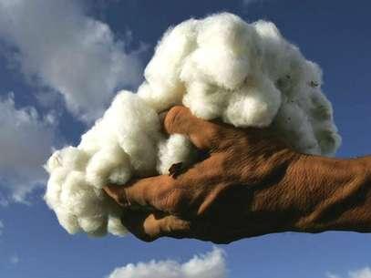 La cosecha de algodón en Uzbekistán: hecha a mano y por médicos y enfermeros. Todo sea por los niños. Foto: GETTY IMAGES