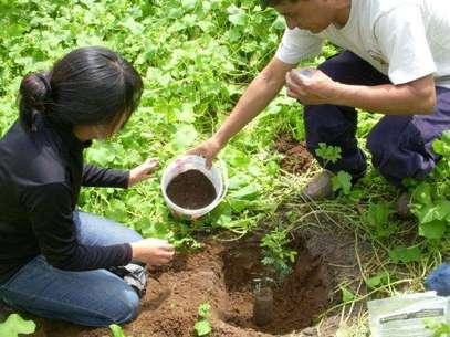 La Dirección Regional Agraria dotará plantones de tara, molle, frutales y plantas nativas para la reforestación de un área de 500 hectáreas. Foto: Referencial/Archivo Andina