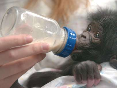 Chimp Haven was created on 200 acres of a Caddo Parish park in Keithville in northwest Louisiana. Foto: Getty Images