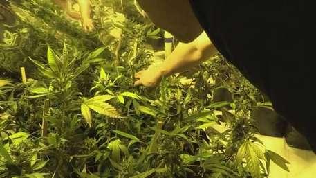 Marihuana se huele cada vez más en Uruguay Video: