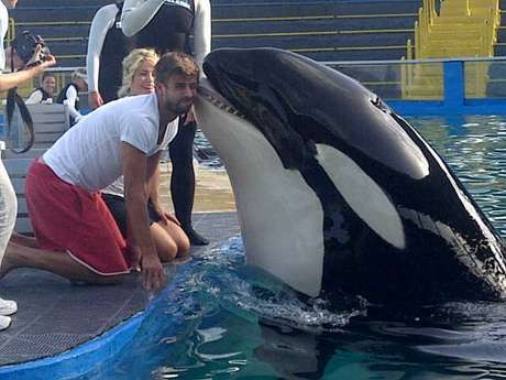 Gerard Pique gets a smooch from a killer whale at the zoo. Foto: Sport