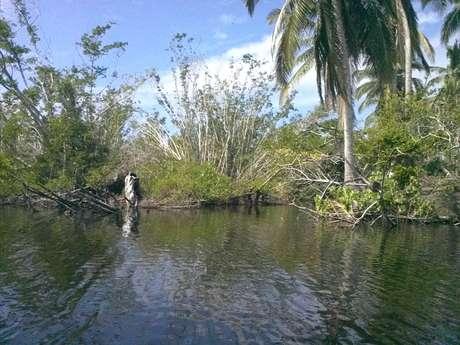 Los residentes de la comunidad pusieron manos a la obra para reforestar la laguna, misma qué perdió entre 60 y 70 por ciento de su manglar, principalmente el blanco, especie que se encarga de filtrar la sal del agua. Foto: Daniel Carrillo / Terra
