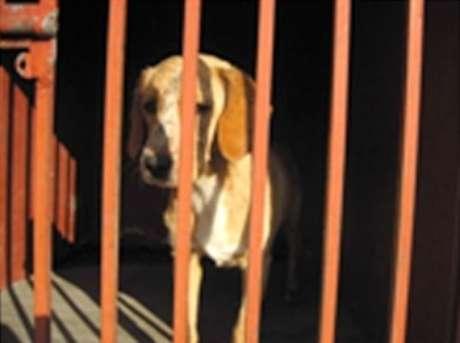 """""""La población canina que deambula por el Bosque de Chapultepec se calcula en unos 300 ejemplares, algunos de ellos, en lugares de constante actividad humana, como la pista 'El Sope', donde se han localizado animales agresivos"""", informó esta noche la corporación en un comunicado.  Foto: Tomada de PGJDF"""