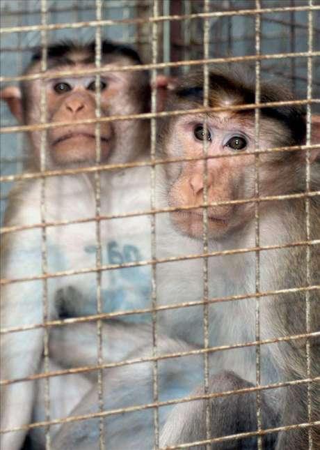 Una nueva ley protegerá a los animales de la experimentación científica Foto: Agencia EFE / © EFE 2013. Está expresamente prohibida la redistribución y la redifusión de todo o parte de los contenidos de los servicios de Efe, sin previo y expreso consentimiento de la Agencia EFE S.A.