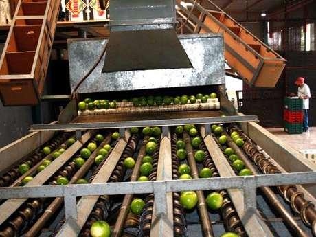 necesario desgravar el arancel de importación de estos alimentos para ampliar su oferta a la población Foto: Archivo
