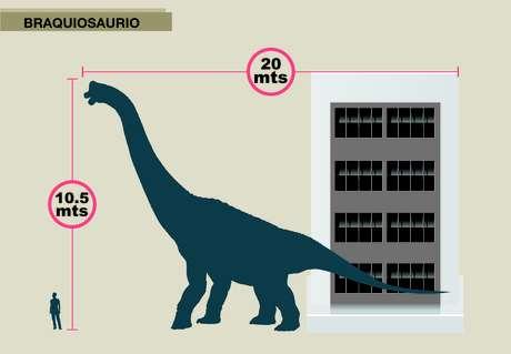 El Braquisaurio, de 20 metros de largo por diez de alto, es similar al tamaño de un edificio de cuatro pisos. Foto: Gentileza