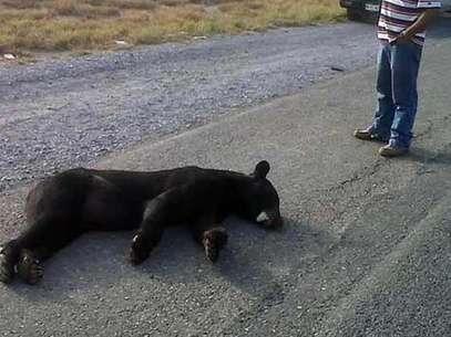 foto de oso camioneros: