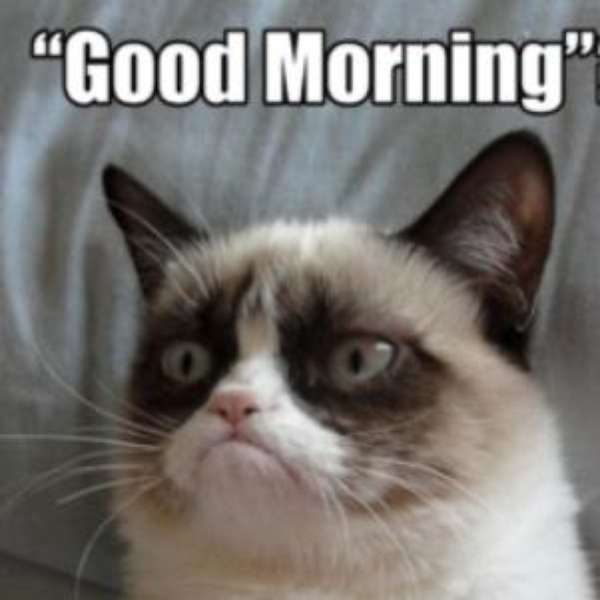 grumpy cat good morning
