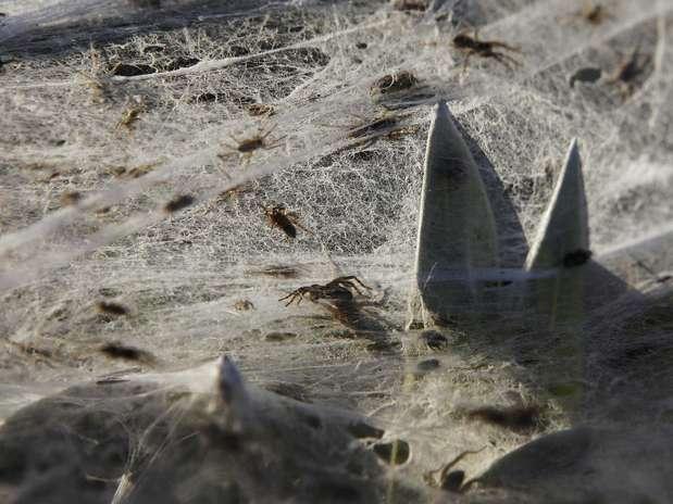 http://p1.trrsf.com/image/fget/cf/67/51/images.terra.com/2012/03/07/GM1E8370RJ401_1933907101.JPG