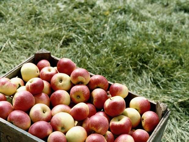 http://p1.trrsf.com/image/fget/cf/67/51/images.terra.com/2012/09/08/1-maca-saude.jpg