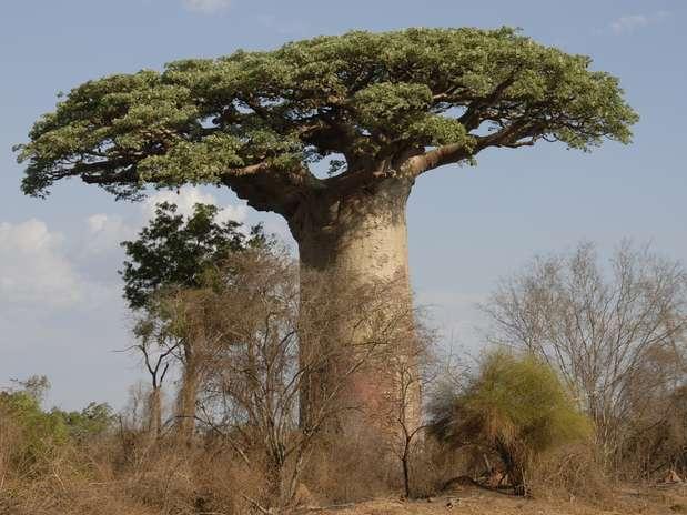 Selva de Madagascar 118178076