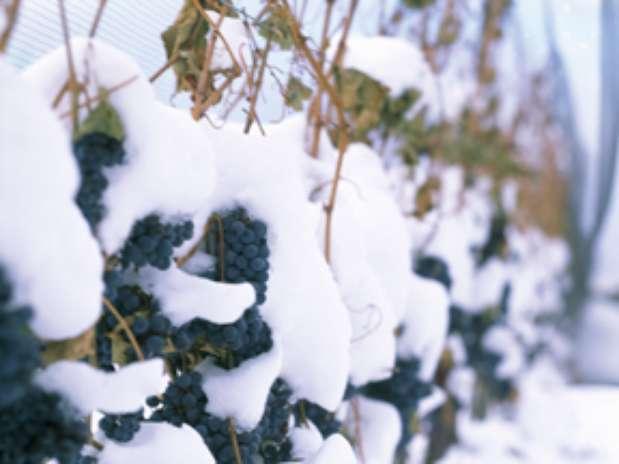 Foto: Ice Wine