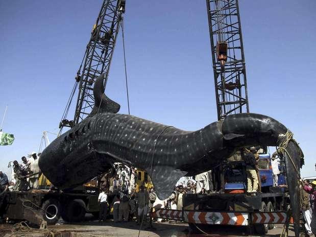 http://p1.trrsf.com/image/fget/cf/67/51/images.terra.com/2012/02/07/20120207_63464218738328762420120207021408.jpg