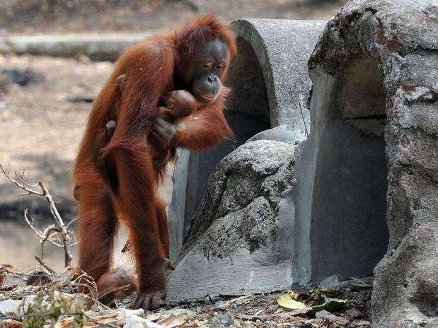 http://p1.trrsf.com/image/fget/cf/67/51/images.terra.com/2012/09/28/mona-01.jpg