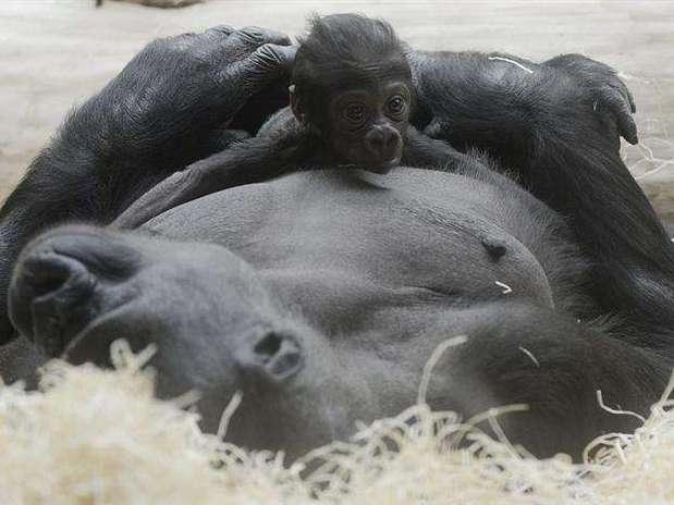 http://p1.trrsf.com/image/fget/cf/67/51/images.terra.com/2012/12/30/520121230634924750988373701w.jpg