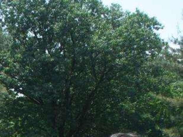 http://p1.trrsf.com/image/fget/cf/67/51/images.terra.com/2013/06/08/coed-topless-baixada-em-07-06-2013.jpg