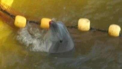 Pescadores são flagrados matando dezenas de golfinhos em praia